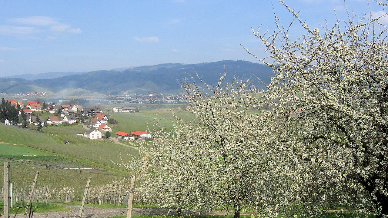 Oberkirch In The Black Forest